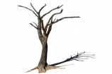 900-year-old-tree;Africa;dead;Deadvlei;desert;Namibia;Southern-Africa;tree-trunk;tree;trunk;cutout;cut;out;shadow