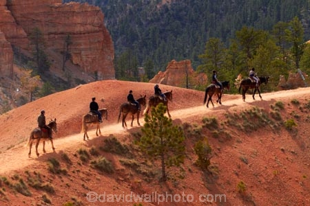 America;American-Southwest;Bryce-Amphitheater;Bryce-Amphitheatre;Bryce-Canyon;Bryce-Canyon-N.P.;Bryce-Canyon-National-Park;Bryce-Canyon-NP;Bryce-Canyon-Rides;Bryce-National-Park-Horseback-Tours;Canyon-Trail-Rides;cowboy;cowboys;equestrian;hiking-path;hiking-paths;hiking-track;hiking-tracks;hiking-trail;hiking-trails;horse;horse-rider;horse-riders;horse-riding;horse-tour;horse-tours;horse-trail;horse-trails;horse-trek;horse-trekker;horse-trekkers;horse-trekking;horse-treks;horseback-tours;horses;national-park;national-parks;path;paths;pathway;pathways;Paunsaugunt-Plateau;people;person;Queens-Garden-Path;Queens-Garden-Trackl;Queens-Garden-Trail;Queens-Garden-walk;Queens-Garden-Path;Queens-Garden-Track;Queens-Garden-Trail;Queens-Garden-walk;route;routes;South-west-United-States;South-west-US;South-west-USA;South-western-United-States;South-western-US;South-western-USA;Southwest-United-States;Southwest-US;Southwest-USA;Southwestern-United-States;Southwestern-US;Southwestern-USA;States;the-Southwest;track;tracks;trail;trails;tramping-track;tramping-tracks;tramping-trail;tramping-trails;U.S.A;United-States;United-States-of-America;USA;UT;Utah;walking-path;walking-paths;walking-track;walking-tracks;walking-trail;walking-trails;walkway;walkways