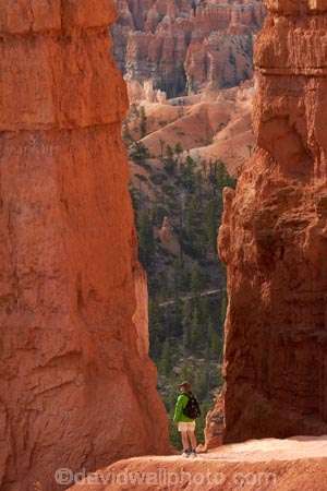 America;American-Southwest;badland;badlands;Bryce-Amphitheater;Bryce-Amphitheatre;Bryce-Canyon;Bryce-Canyon-N.P.;Bryce-Canyon-National-Park;Bryce-Canyon-NP;clay;column;columns;earth-pyramid;earth-pyramids;eroded;erosion;fairy-chimney;fairy-chimneys;formation;formations;geological;geology;hiker;hikers;hiking-path;hiking-paths;hiking-track;hiking-tracks;hiking-trail;hiking-trails;hoodoo;hoodoos;layer;layers;national-park;national-parks;natural-geological-formation;natural-geological-formations;natural-tower;natural-towers;Navajo-Loop;Navajo-Loop-path;Navajo-Loop-track;Navajo-Loop-trail;Navajo-Loop-walk;Navajo-path;Navajo-track;Navajo-trail;Navajo-walk;North-America;path;paths;pathway;pathways;Paunsaugunt-Plateau;people;person;pillar;pillars;pinnacle;pinnacles;rock;rock-chimney;rock-chimneys;rock-column;rock-columns;rock-formation;rock-formations;rock-pillar;rock-pillars;rock-pinnacle;rock-pinnacles;rock-spire;rock-spires;rock-tower;rock-towers;rocks;route;routes;Sandstone;South-west-United-States;South-west-US;South-west-USA;South-western-United-States;South-western-US;South-western-USA;Southwest-United-States;Southwest-US;Southwest-USA;Southwestern-United-States;Southwestern-US;Southwestern-USA;States;stone;tent-rock;tent-rocks;the-Southwest;tourism;tourist;tourists;track;tracks;trail;trails;tramping-track;tramping-tracks;tramping-trail;tramping-trails;U.S.A;United-States;United-States-of-America;unusual-natural-feature;unusual-natural-features;unusual-natural-formation;unusual-natural-formations;USA;UT;Utah;walker;walkers;walking-path;walking-paths;walking-track;walking-tracks;walking-trail;walking-trails;walkway;walkways;weathered;weathering;wilderness;wilderness-area;wilderness-areas