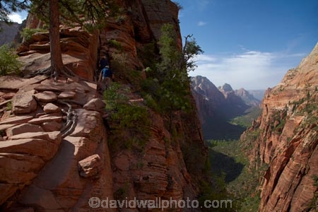 adventure;adventurous;America;American-Southwest;Angels-Landing;Angels-Landing-track;Angels-Landing-trail;Angel's-Landing;Angel's-Landing-track;Angel's-Landing-trail;bluff;bluffs;cliff;cliffs;danger;dangerous;dangerous-hike;dangerous-track;hiker;hikers;hiking-path;hiking-paths;hiking-track;hiking-tracks;hiking-trail;hiking-trails;lookout;lookouts;national-parks;overlook;path;paths;pathway;pathways;people;person;route;routes;South-west-United-States;South-west-US;South-west-USA;South-western-United-States;South-western-US;South-western-USA;Southwest-United-States;Southwest-US;Southwest-USA;Southwestern-United-States;Southwestern-US;Southwestern-USA;States;the-Southwest;tourism;tourist;tourists;track;tracks;trail;trails;tramping-track;tramping-tracks;tramping-trail;tramping-trails;U.S.A;United-States;United-States-of-America;USA;UT;Utah;view;viewpoint;viewpoints;views;walker;walkers;walking-path;walking-paths;walking-track;walking-tracks;walking-trail;walking-trails;walkway;walkways;Zion;Zion-Canyon;Zion-N.P.;Zion-National-Park;Zion-NP